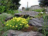 Alpinum Gebirgspflanzen Balkan-Kleinasien-Kaukasus