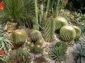 Cacti-Succulent-Mediterrainean House