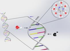 DNA-Wasser