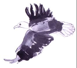 Clarity Eagle
