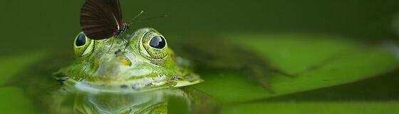 Frog_1280x365