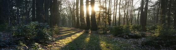 Herbst_Wald