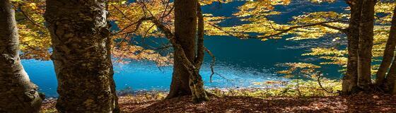 See_Herbst