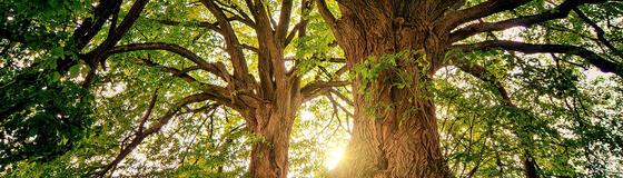 tree_1280x365