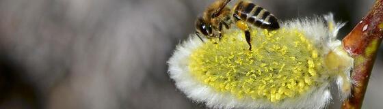 pollen_karussell