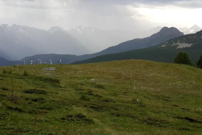 Torgnon study site