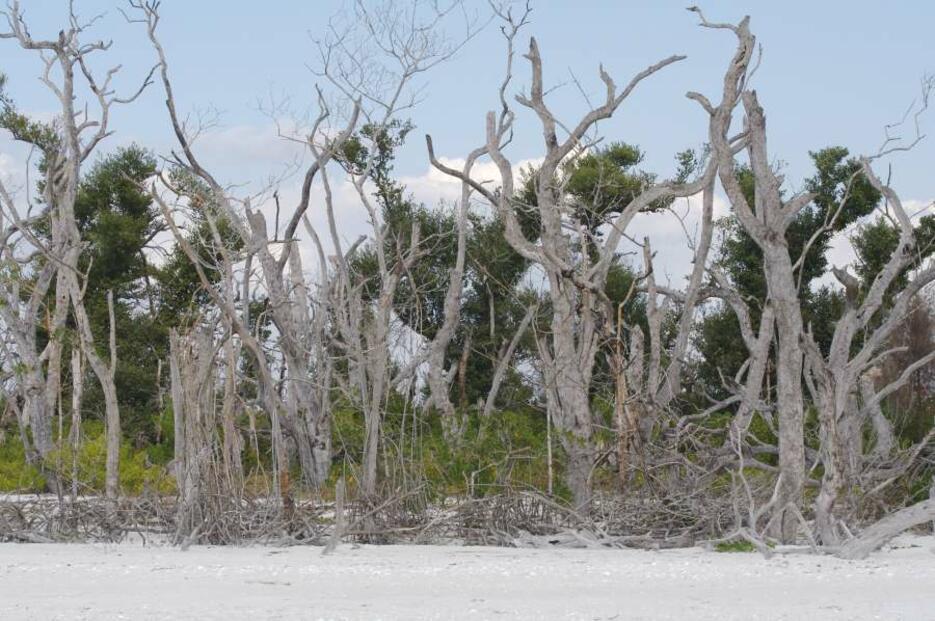 florida-hurricane-catrina-min_935x561px