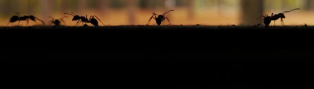 Zeit für Wissenschaft: Ameisen
